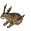 Brauner Hase icon.png